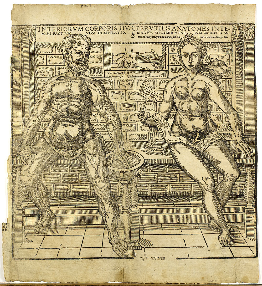 Anatomy of the Inward Parts of Woman (London, 1650).