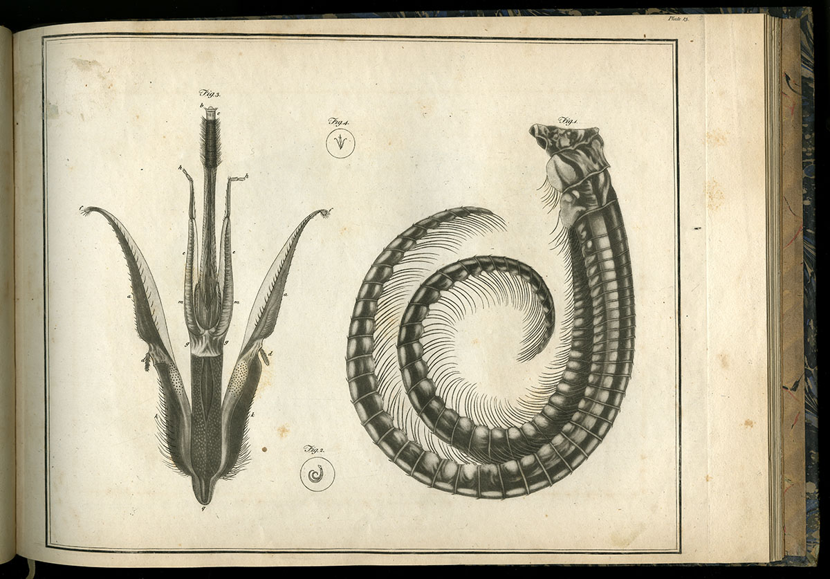 George Adams, Plates for the Essays on the Microscope (London, 1787).